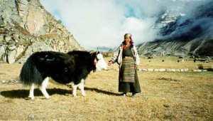 yak-ladakh